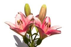 лилии букета Стоковое Изображение