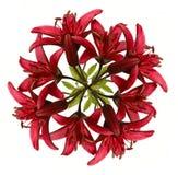 лилии венок вне красный Стоковое Изображение
