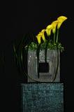 лилии дисплея calla Стоковое фото RF