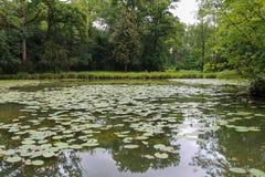 Лилии желтой воды в пруде парка Стоковая Фотография