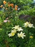 Лилии и георгины в саде стоковое фото rf