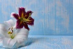 Лилии на таблице Стоковое Изображение