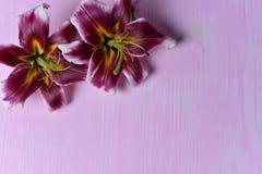Лилии на таблице Стоковое фото RF