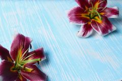 Лилии на таблице Стоковая Фотография