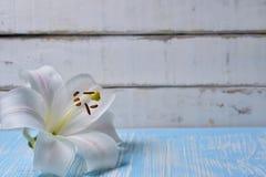 Лилии на таблице Стоковые Изображения RF