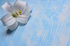 Лилии на таблице Стоковое Фото