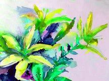 Лилии цветения белого цветка желтого цвета лета природы предпосылки искусства акварели красочные садовничают Стоковые Изображения RF
