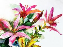 Лилии цветения цветка пинка лета природы предпосылки искусства акварели красочные садовничают Стоковое Фото
