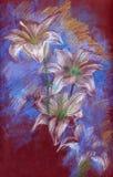 лилии Стоковые Изображения