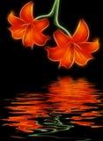 лилии 2 Стоковое Изображение RF