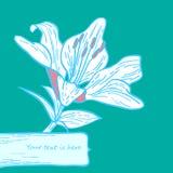 лилия карточки Стоковые Фотографии RF