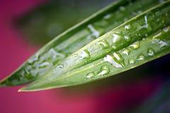 лилия листьев abstarct Стоковые Фото