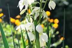 Лилия насыпи - юкка стоковое изображение rf