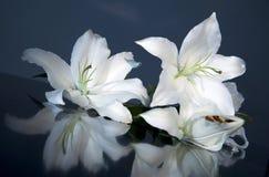лилия пасхи Стоковые Изображения RF