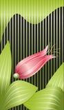 лилия цветка предпосылки Стоковое Изображение RF