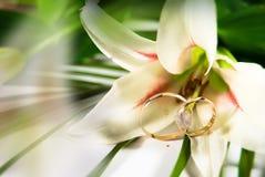 лилия цветка Стоковое Фото