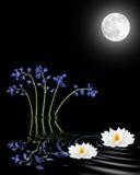 лилия цветков bluebells Стоковые Изображения
