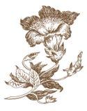 лилия Стоковые Изображения