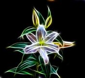 лилия Стоковое фото RF