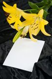 лилия drapery Стоковые Фотографии RF