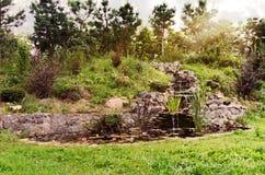Лили-пруд Стоковые Изображения