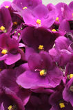 лилово стоковое фото
