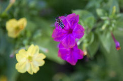 Лиловые цветки Стоковые Фотографии RF