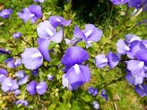 Лиловый цветок Стоковые Изображения