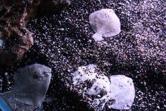 Лиманда песка & x28; flounder& x29; Стоковое фото RF