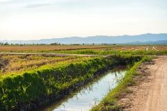 Лиман перепада Эбра и заболоченные места, Таррагона, Catalunya, Испания Скопируйте космос для текста Стоковое фото RF