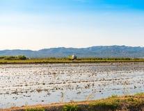 Лиман перепада Эбра и заболоченные места, Таррагона, Catalunya, Испания Скопируйте космос для текста Стоковая Фотография