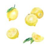 Лимоны акварели все, половинный, кусок стоковая фотография rf