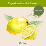 Лимоны акварели Иллюстрация нарисованная рукой на белой предпосылке Бесплатная Иллюстрация