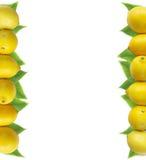 Лимоны на границе изображения с космосом экземпляра для текста Взгляд сверху Стоковые Изображения RF
