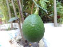 Лимоны очищают все Это большой дезинфектант Если жизнь дает вам лимоны, то вы должны сделать лимонад стоковое фото rf