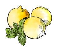 Лимоны Стоковое Изображение RF