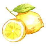 Лимон акварели Стоковое Изображение