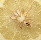 Лимон в отрезке Стоковые Изображения