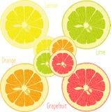 Лимон, известка, апельсин, розовый грейпфрут, помело на прозрачной предпосылке Стоковые Фото