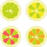 Лимон, известка, апельсин, розовый грейпфрут, собрание помела иллюстраций на прозрачной предпосылке Стоковое фото RF