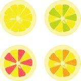 Лимон, известка, апельсин, розовый грейпфрут, собрание помела иллюстраций на прозрачной предпосылке Стоковая Фотография