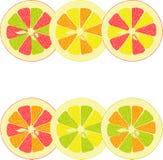 Лимон, известка, апельсин, розовый грейпфрут, собрание помела иллюстраций Стоковое Изображение