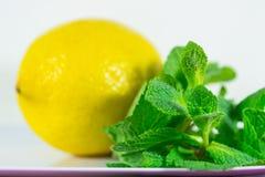 Лимон и мята Стоковая Фотография