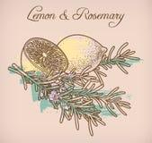 Лимон и rosemary Стоковое Изображение