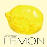 Лимон картины акварели Стоковое фото RF