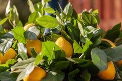 Лимон на вале стоковое фото