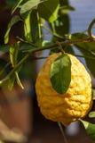 Лимон на вале стоковое изображение