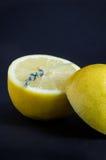 Лимон отрезанный в половине с мукой лаванды Стоковые Изображения RF