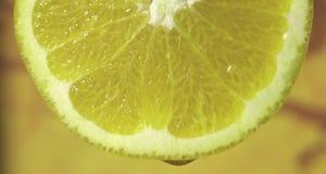 лимон падения Стоковое Изображение RF