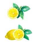 Лимон при листья мяты изолированные на белой иллюстрации акварели Стоковые Фото